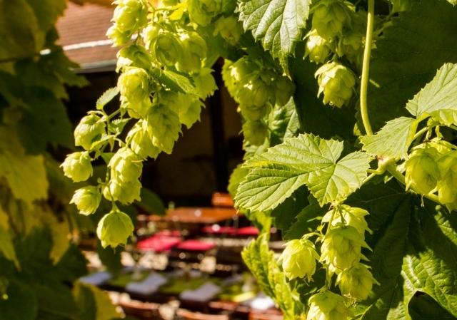 Biergarten Schlechterbräu Lindau